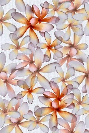 Эйвон цветы