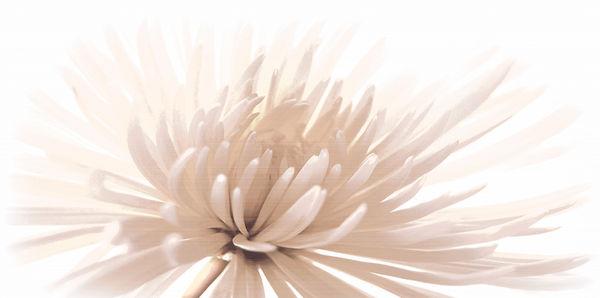 Вставка EMMA белый
