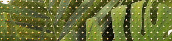 Бордюр TROPICANA зеленый